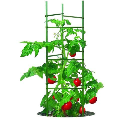 Gardener s Blue Ribbon Poly Tomato Cage Plant Stakes