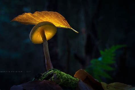 Glowing Mushrooms Come To Life In A Fairytale World By