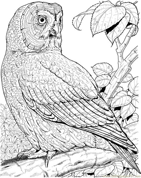 Great Grey Owl color page Owls Coloring pages