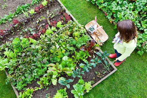 Grow Your Own A Vegetable Garden How To Guide Health