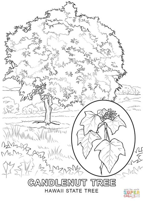 Hawaii State Tree coloring page Free Printable Coloring