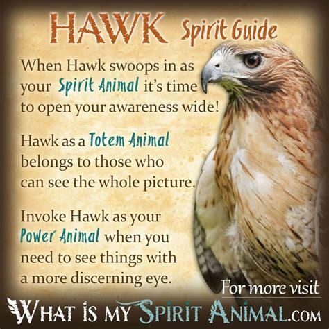 Hawk Symbolism Hawk Meaning Hawk Dreams Hawk Totem