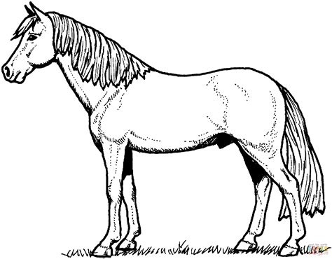 Horse Coloring Pages Free and Printable