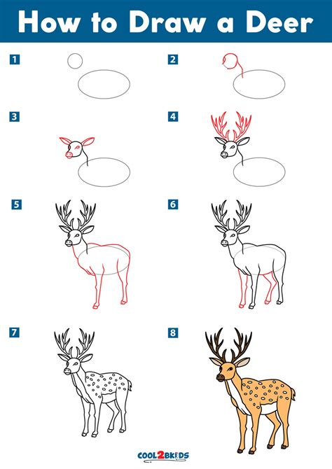 How To Draw A Deer Drawing Realistic Deer Step By Step