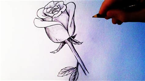 How To Draw A Rose easy drawings and sketches