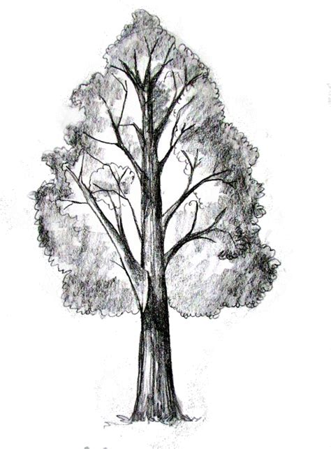How To Draw A Tree What We Are About Happy Family Art