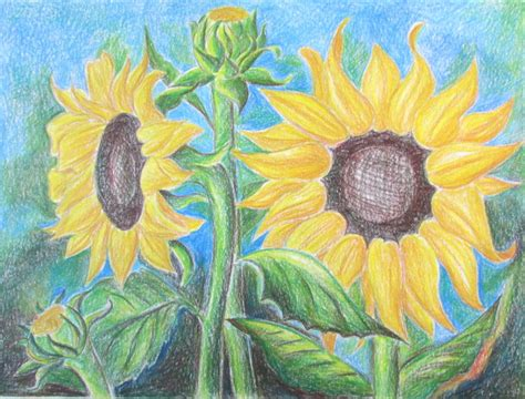 How To Draw Sunflowers Happy Family Art