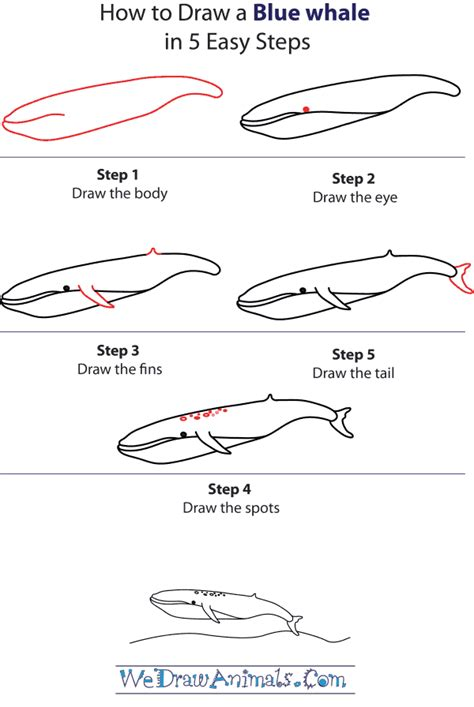 How To Draw a Blue Whale Step by Step