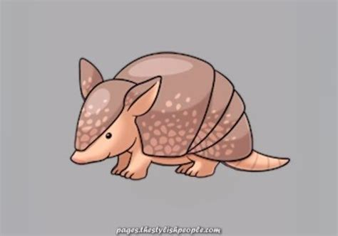 How To Draw an Armadillo Step by Step