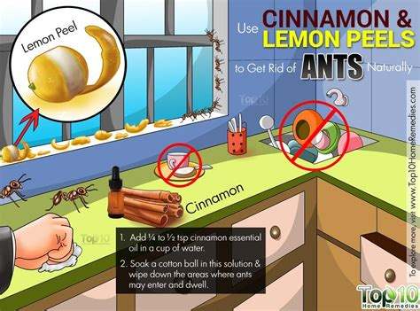 How To Kill and Get Rid of Ants EPestSupply