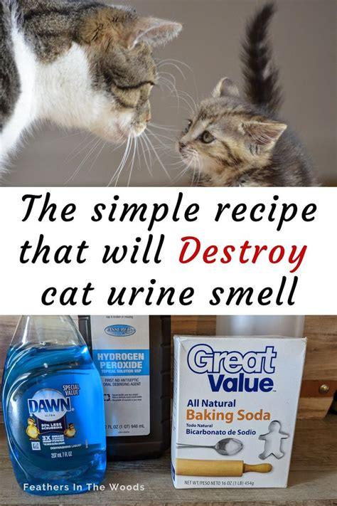How To Remove Embarrasing Cat Urine Odor