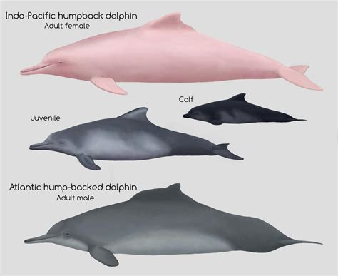 How did dolphins and sharks both evolve fins Evolution
