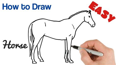 How to Draw Horse Eyes How to Draw Draw Step by Step