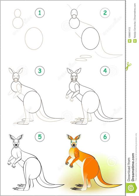 How to Draw Kangaroos Step by Step desert animals