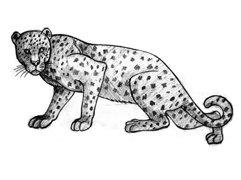 How to Draw Leopards 11 Steps with Pictures wikiHow