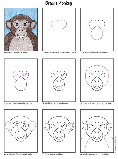 How to Draw a Baboon Step by Step Rainforest animals
