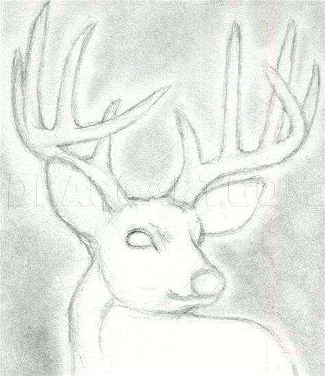How to Draw a Deer Head Buck Dear Head Step by Step