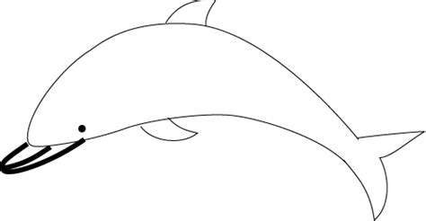How to Draw a Dolphin Dolphin Facts and Information