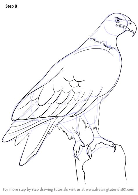 How to Draw a Golden Eagle Learn How to Draw Animals