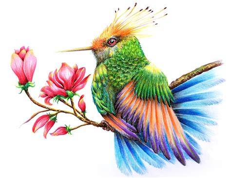How to Draw a Hummingbird Drawing With Color Pencils