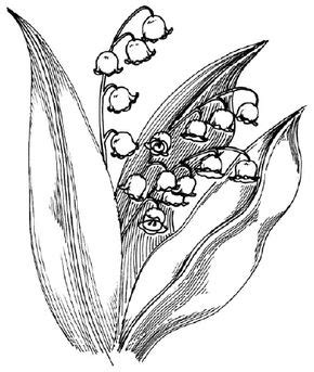 How to Draw a Lily HowStuffWorks