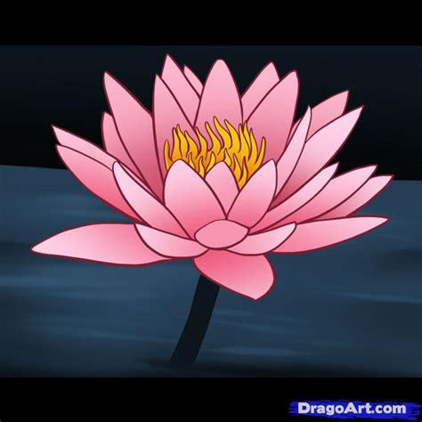 How to Draw a Lily Step by Step Flowers Pop Culture