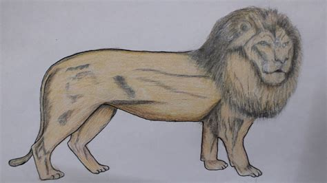 How to Draw a Lion Narrated Step by Step YouTube