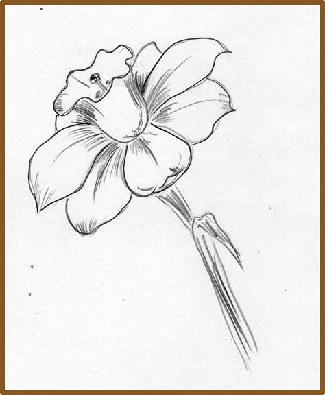 How to Draw a Narcissus or Daffodil Flower with Easy Step