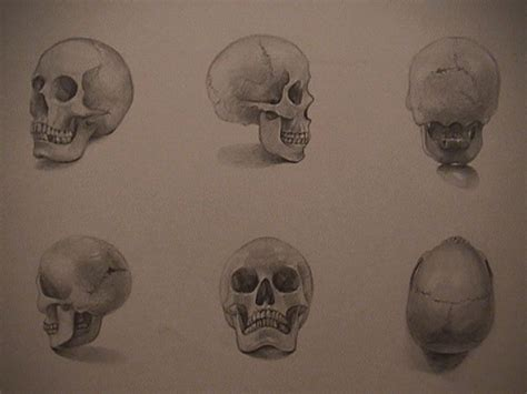 How to Draw a Skull 50 Tutorials Drawn in Black