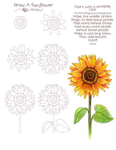 How to Draw a Sunflower Realistic Sunflower Step by Step