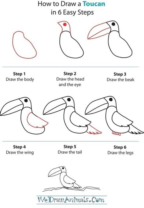 How to Draw a Toucan Wedrawanimals
