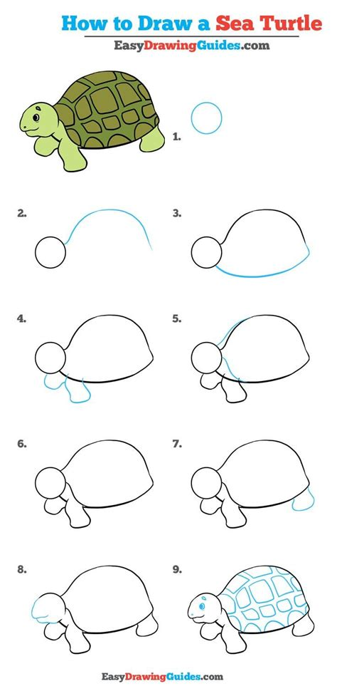 How to Draw a Turtle for Kids Easy Step by Step Drawing