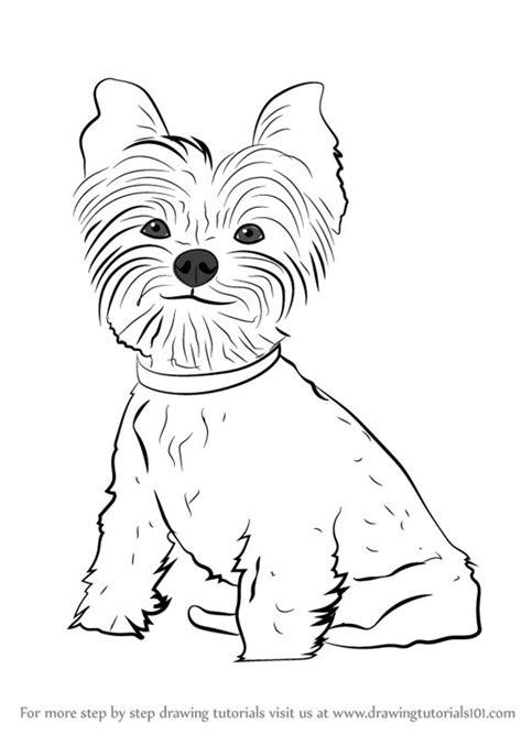 How to Draw a Yorkie Dog Step by Step