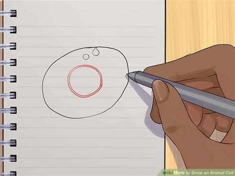 How to Draw an Animal Cell 11 Steps with Pictures wikiHow