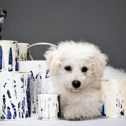 How to Get Dry Paint Out of Carpet Home Guides SF Gate