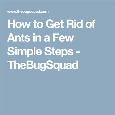 How to Get Rid of Ants in a Few Simple Steps TheBugSquad
