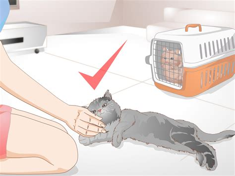 How to Get Rid of Cat Spray Odor 12 Steps with Pictures