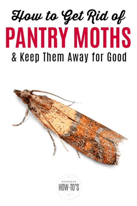 How to Get Rid of Moths pestHow