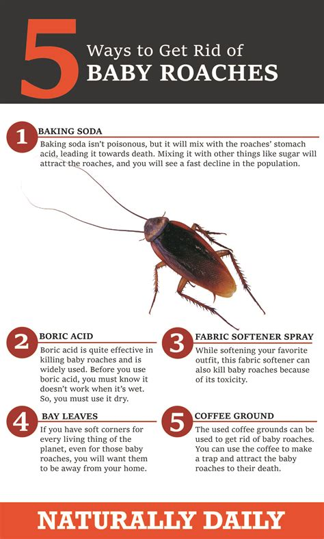 How to Get Rid of Roaches Indoor Roach Control Get Rid