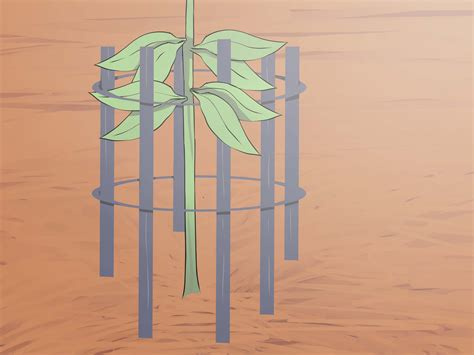 How to Grow an Oak Tree from an Acorn 14 Steps with