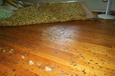 How to Remove Carpet Padding that is Stuck to the Floor