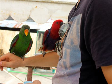 How to Select a Pet Parrot 10 Steps with Pictures wikiHow