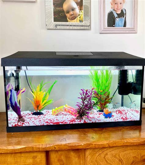 How to Set Up a Freshwater Aquarium with Pictures