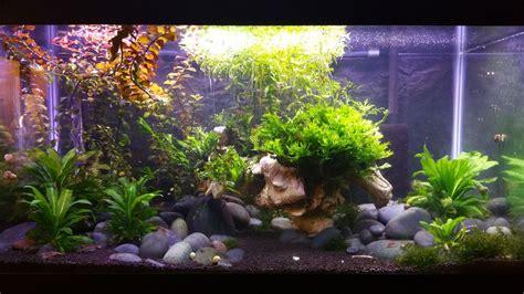 How to Setup a Low tech Planted Tank Planted Aquarium