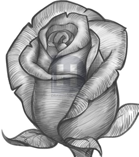 How to Sketch a Rose by Darkonator DrawingHub