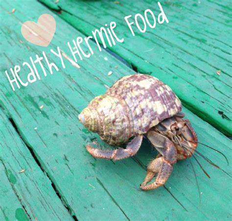 How to Spoil Your Hermit Crabs Food Edition 11 Steps