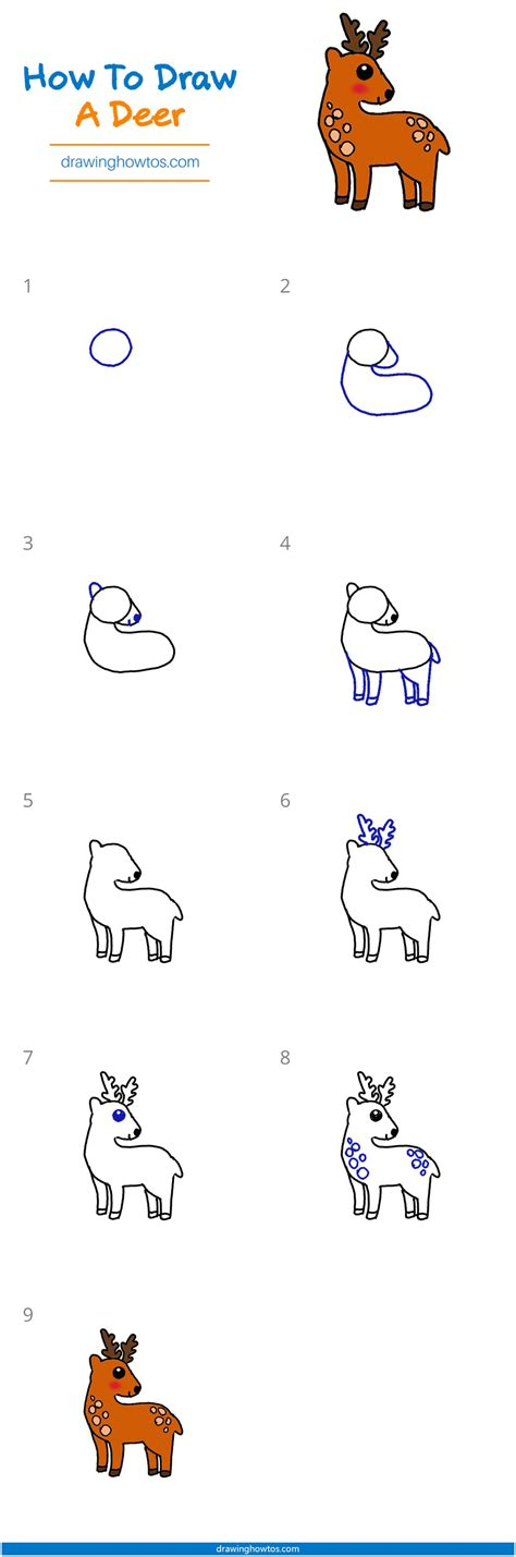 How to draw a Deer Draw Step by Step