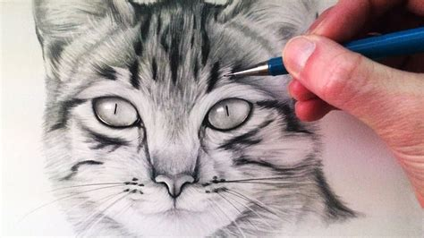 How to draw a cat face YouTube