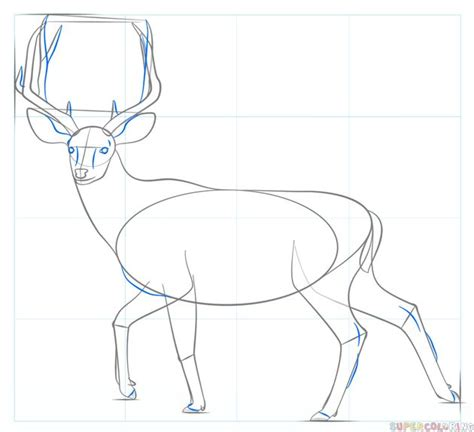 How to draw a mule deer Step by step Drawing tutorials