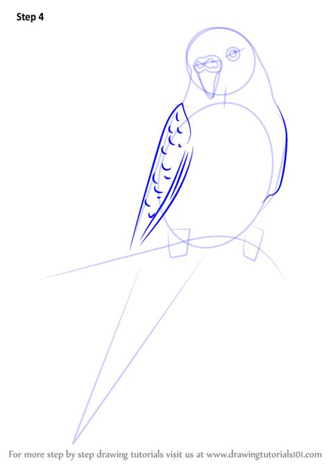 How to draw a parakeet Step by step Drawing tutorials
